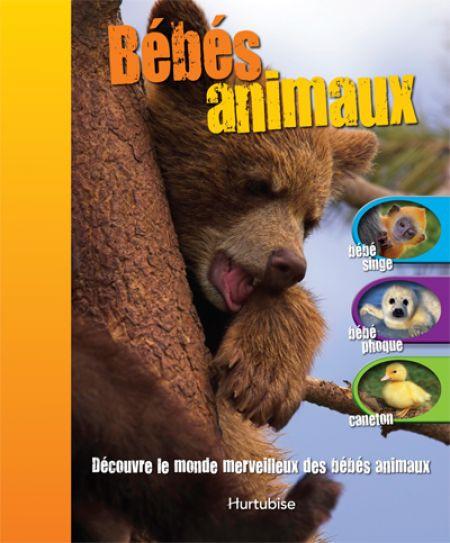 Couverture de Bébés animaux